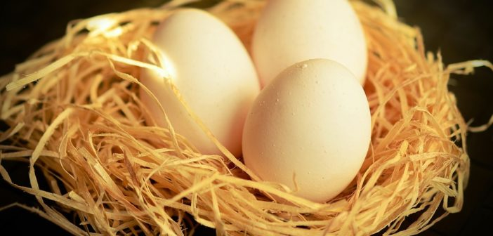 Vybíráme vejce vsupermarketu: Víte, jak na to?