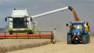 sklizeň obilí