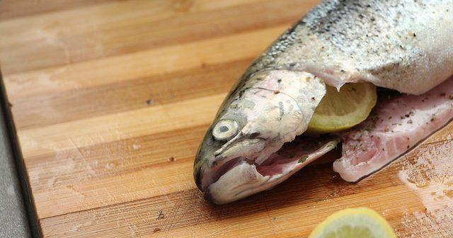 Pstruh lososovitý – ryba, které byste měli dát šanci
